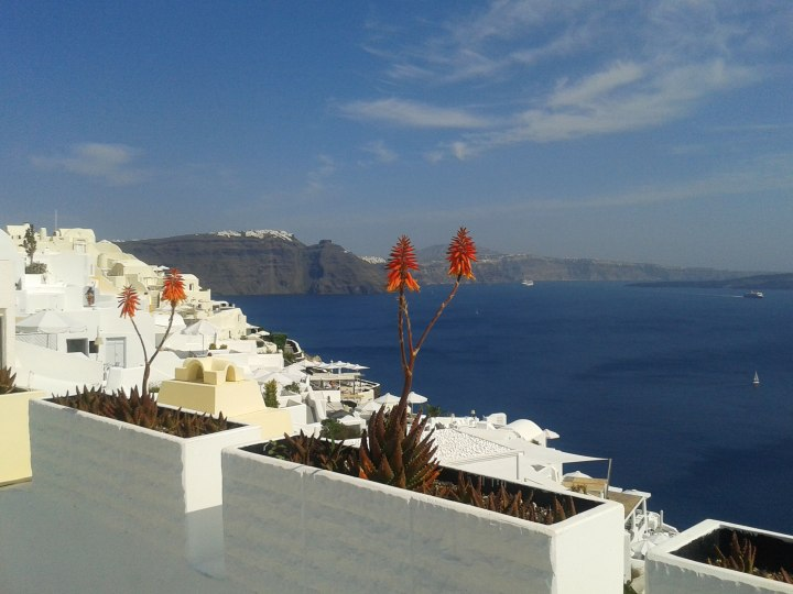 oia-perspective-sea-orange-flowers